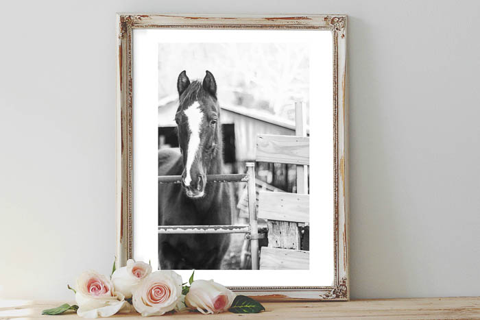 Horse Wall Art - black horse with white face - Rain on a Tin Roof