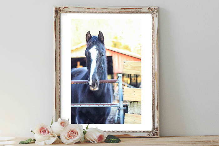 Printable Horse Art - Black and White Horse - Rain on a Tin Roof