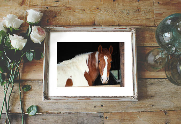 Free Horse Pictures to Print - Brown and White Horse - Rain on a Tin Roof