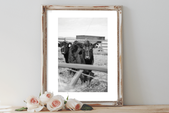 Cow Printable