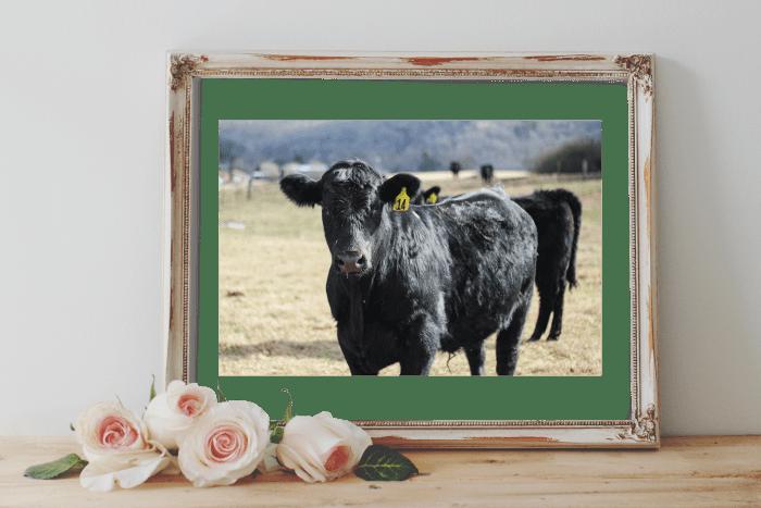 Cow Print - Free Printable Art Prints
