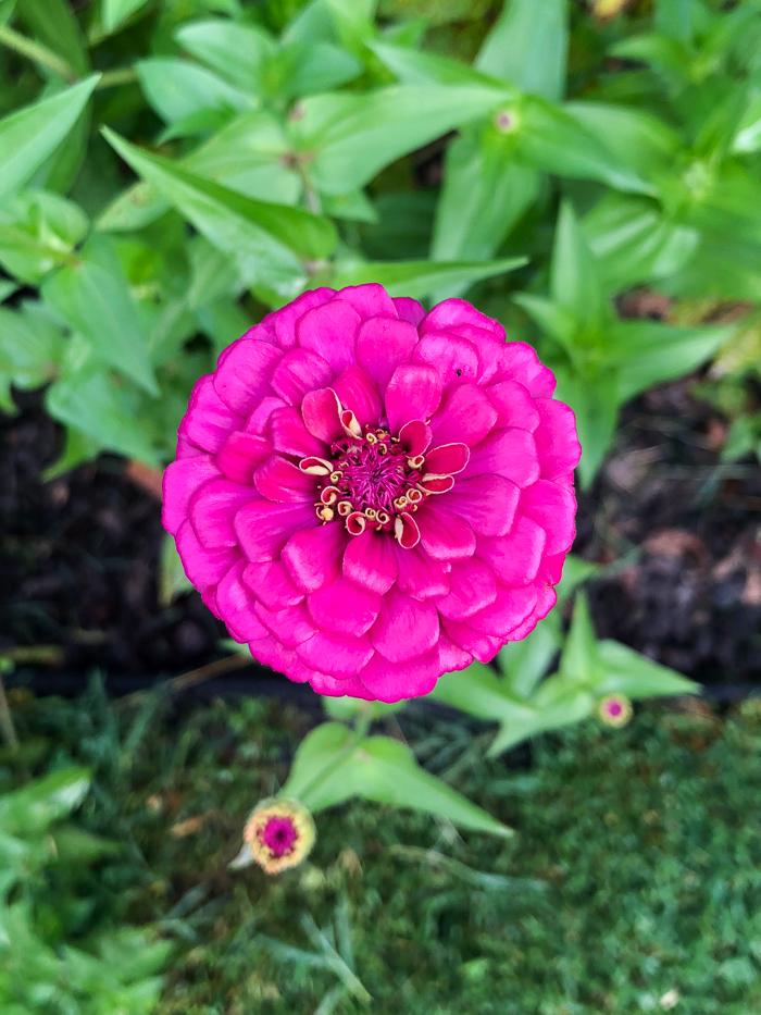 Best Flowers for a Cutting Garden