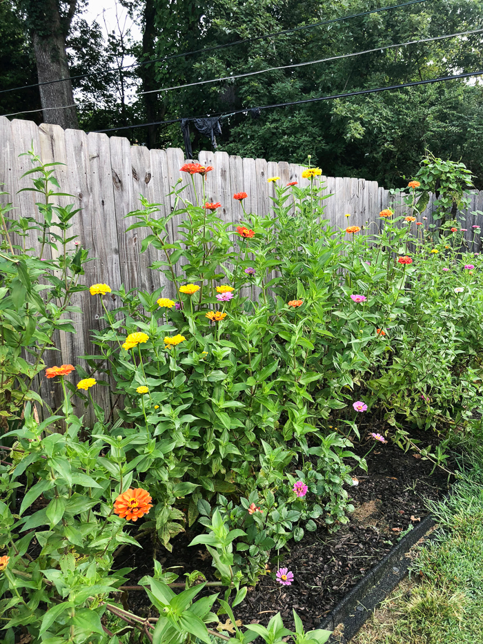 How To Create A Cut Flower Garden For Beginners Step By Step