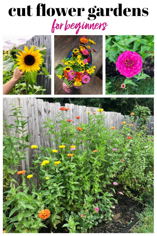 Cut Flower Gardens for Beginners