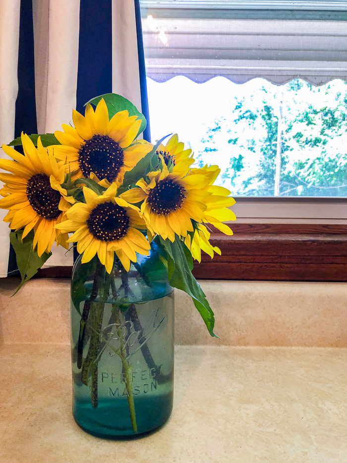 Best Cut Flowers to Grow