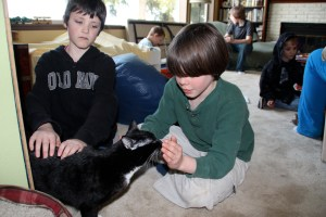 Often animals will sniff your hands to get a feel for the Reiki before they choose to take any or not.  Our cat Inky is sniffing this boys hands during a Kid's Reiki circle to make his decision.  Never force an animal to participate.  This builds patience in the child, another great outcome of doing Reiki on pets.