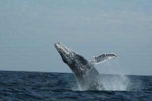 Whale Watching in Puerto Vallarta!