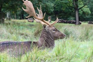 Dunham Massey - National Trust (32)