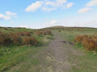 Hobsons Moor walk