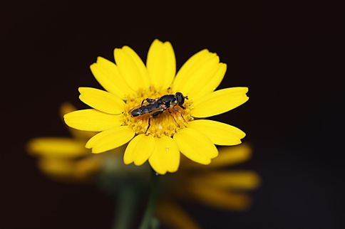 Macro with Sigma 105mm
