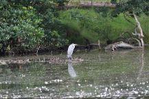 Lake at Lyme