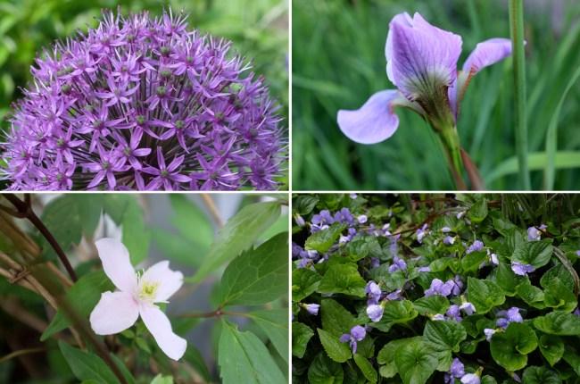Blooms_Purple