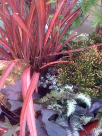 Dark sweet potato vine and Japanese painted fern