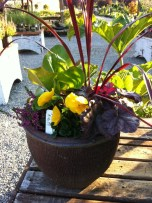 Pansies and Friends