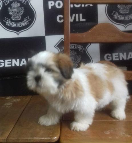 Polícia Civil recupera cachorro furtado de criança com necessidades especiais