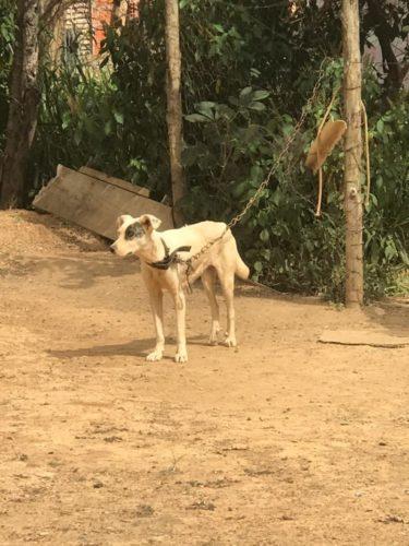 Polícia Civil resgata animais vítimas de maus-tratos em Luziânia