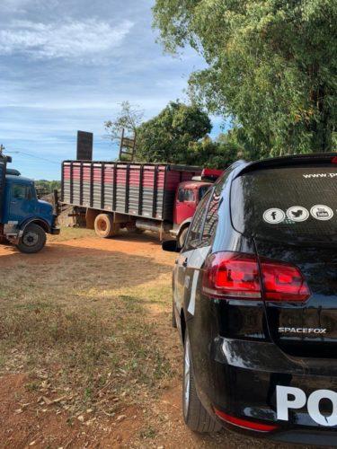 Operação da Polícia Civil, com apoio da PM e Agrodefesa, recupera dezenas de cabeças de gado furtadas em Bela Vista