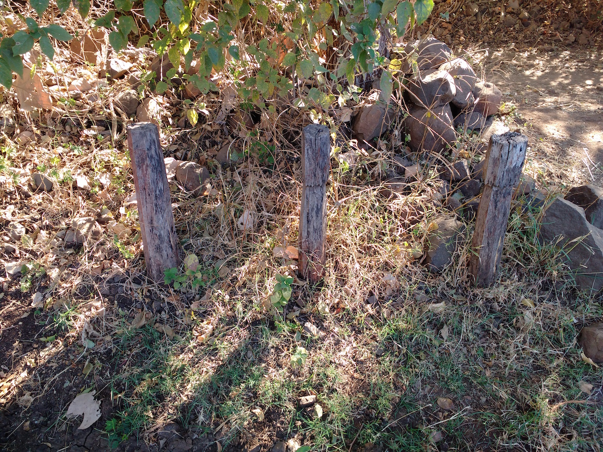 Traditional indal : Teak wood pillars on a farm hedge, indicator that the family had conducted Indal festival some years ago.
