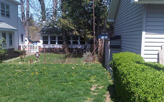 backyard-before