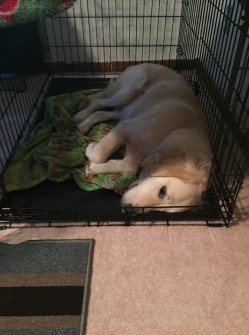 Learning to be a service dog is hard work!