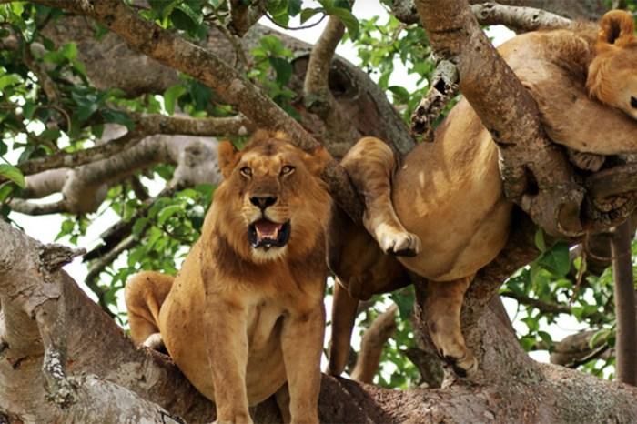 3-Day Discover Queen Elizabeth National Park