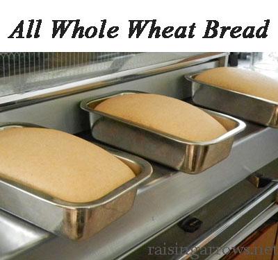 Granny's Whole Wheat Bread Recipe