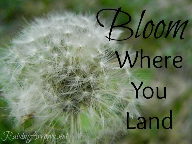 Bloom Where You Land   RaisingArrows.net