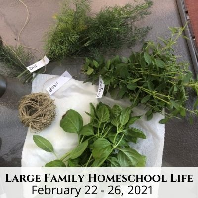Large Family Homeschool Life – 2/22/21 – 2/26/21