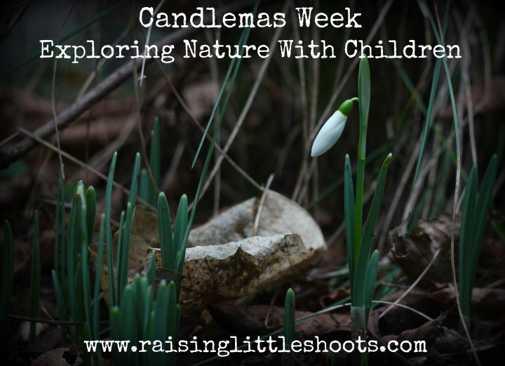 candlemas-week