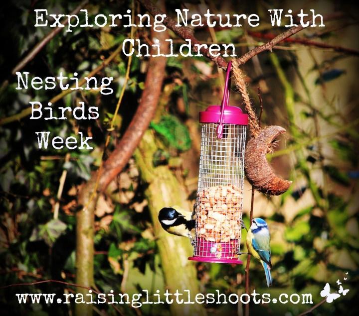 nesting-birds-week