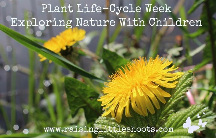 plant life cycle week.jpg
