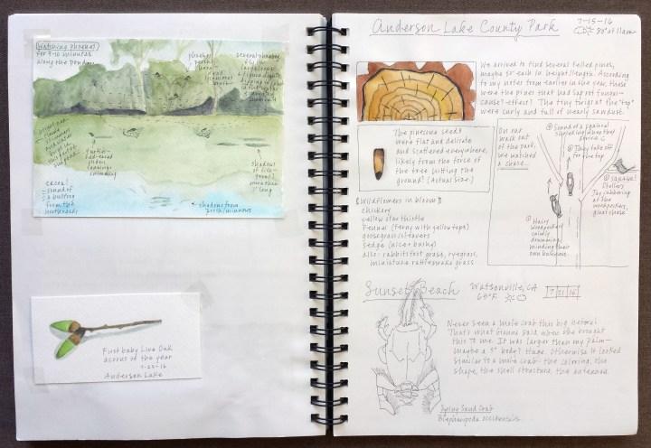 Journal 2.jpg