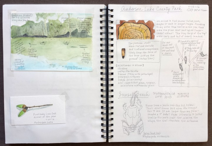 Keeping a nature journal on this outing i challenged myself to journal some events rather than just objects i have two events here a chase between a squirrel and some woodpeckers solutioingenieria Images