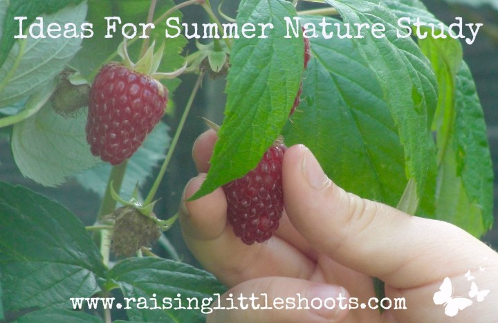 Ideas For Summer Nature Study