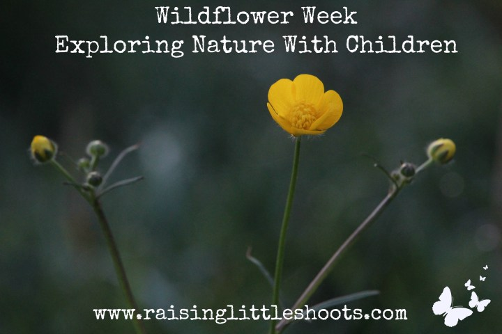 wildflower week