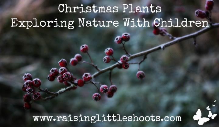 Christmas Plants.jpg