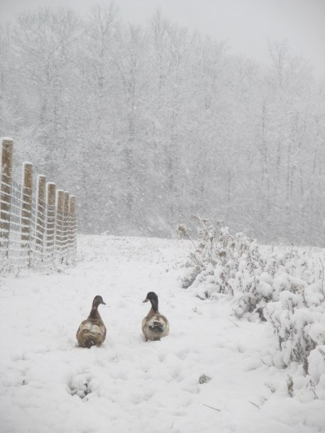 """I like courting in the snow,"" Ferd says, gruffly. ""And Sophie, I do love you, too. C'mon, I'll get you home safely."""