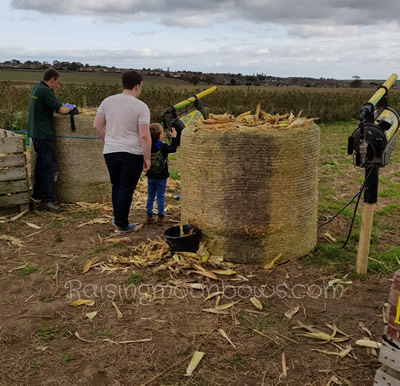 Farmer Copleys Pumpkin Festival - corn cob cannon