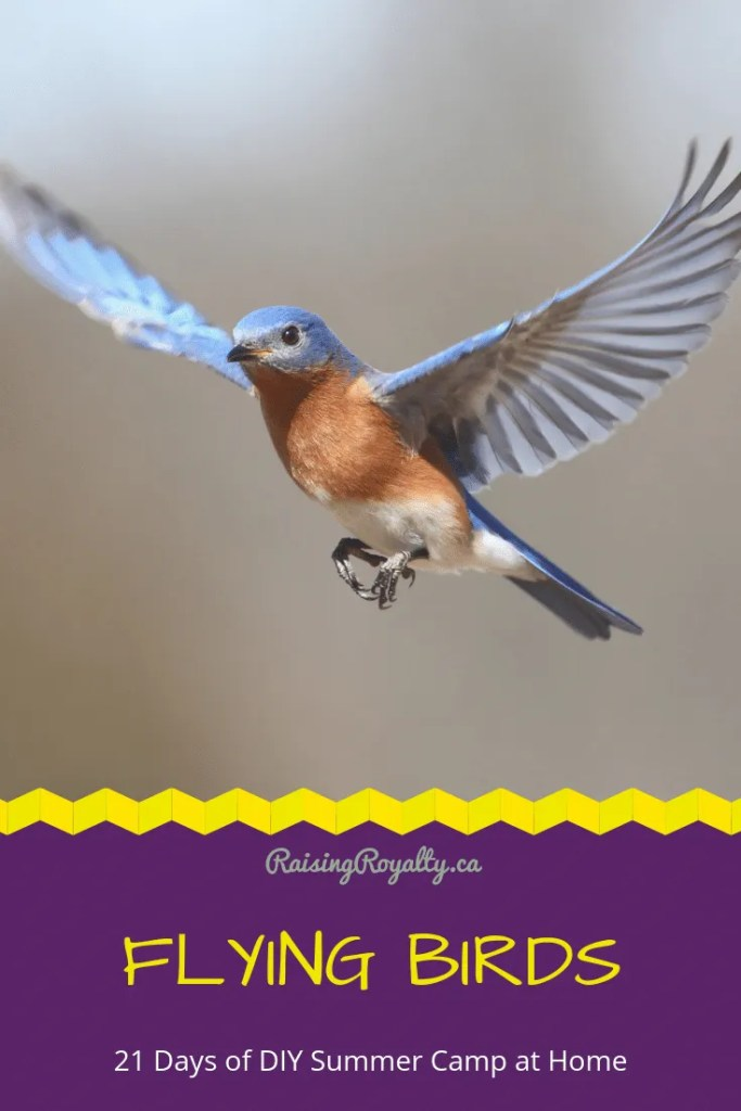 How do birds fly? Let's explore flying birds, with wings, strings and other flying things. It's Day 5 of the 21 Days of DIY Summer Camp.
