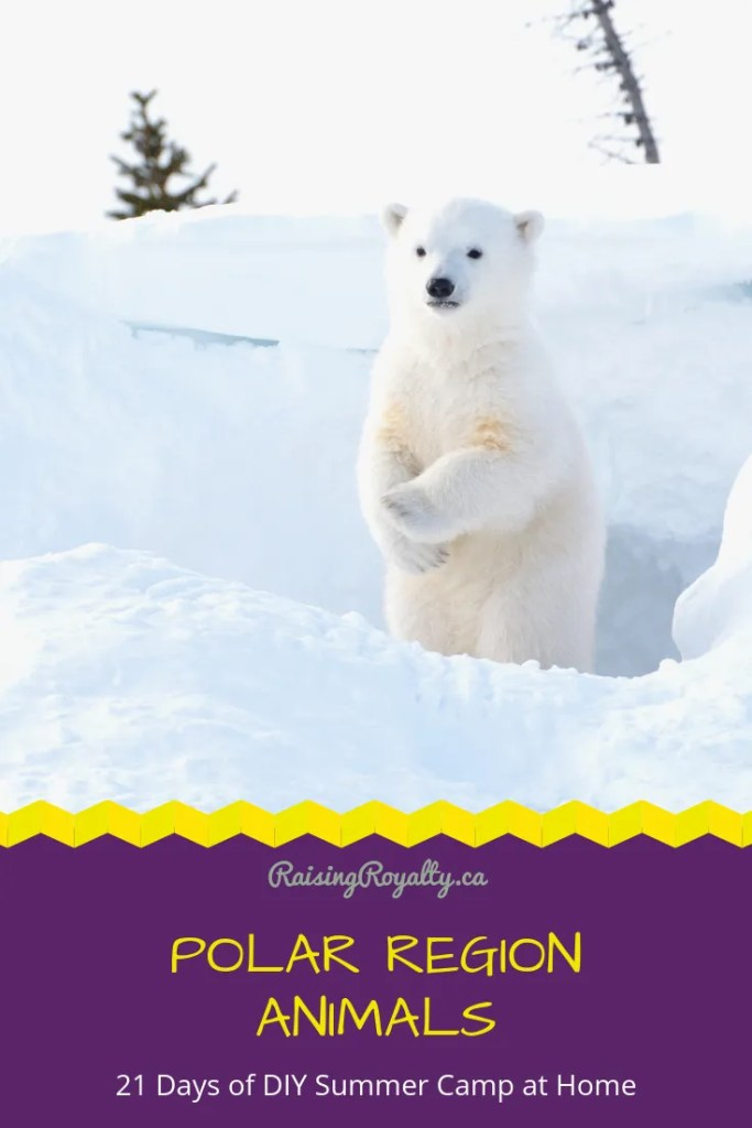 On day 19 of 21 days of DIY summer camp at home, let's cool off with some fun with the polar region animals. We'll play with polar bears & penguins!