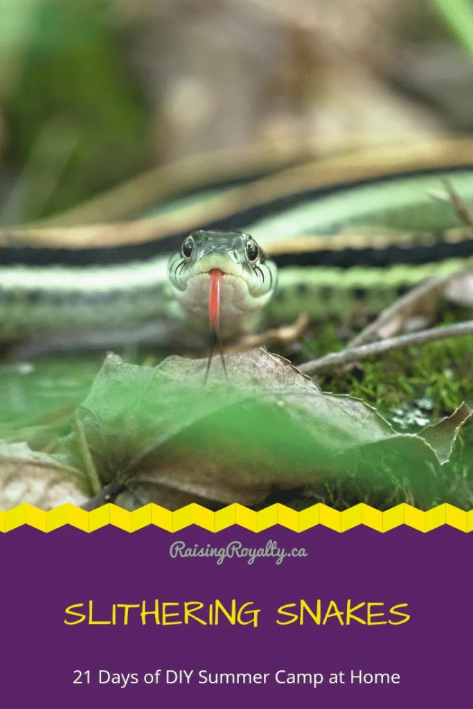Snakes are fascinating creatures! But they can be a bit scary too. Let's learn about slithering snakes, by making our own and playing snake games.