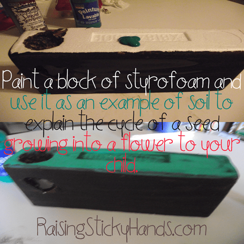 Paint a block of styrofoam and use it as an example to explain the cycle of a seed growing into a flower to your child