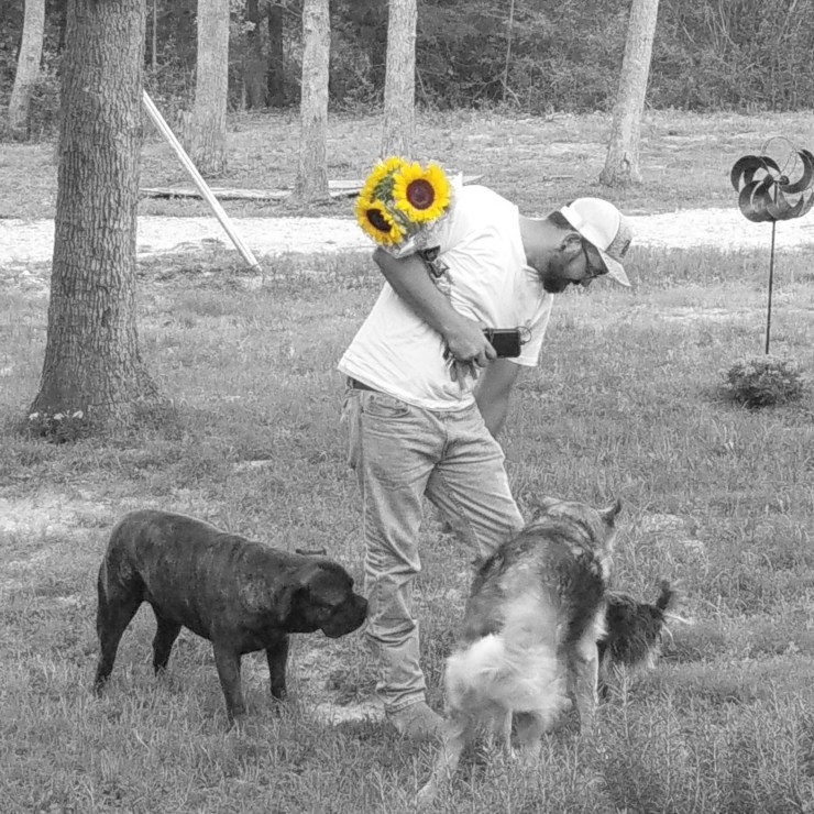 man with sunflowers and dogs