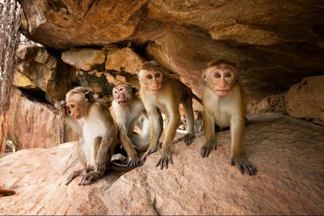 Monkey kingdom film in theaters