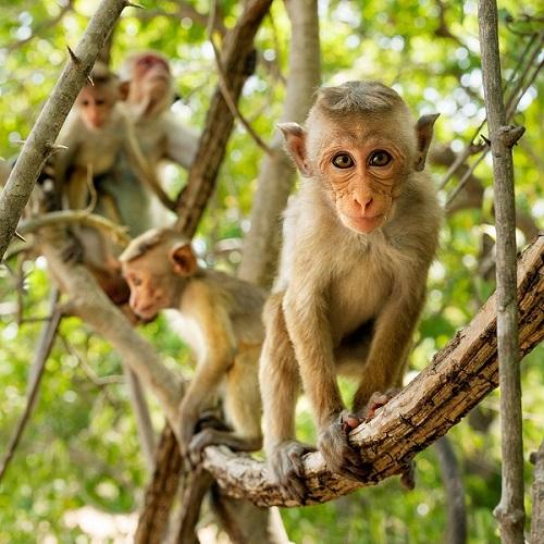 Monkey kingdom in theaters