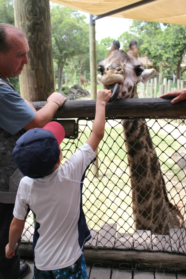 Brevard zoo bests