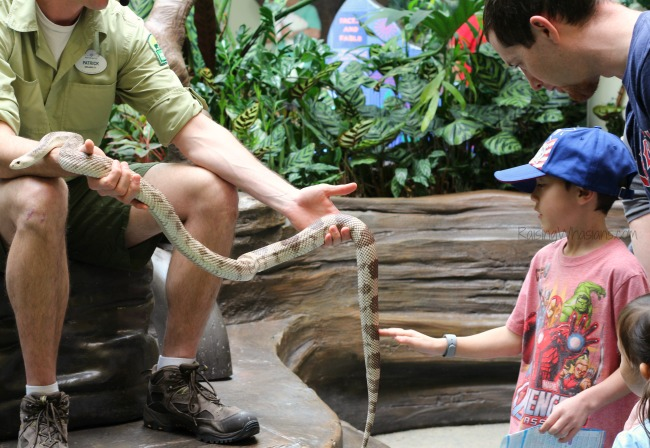 Disney animal kingdom best