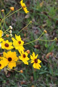 Family Focus Friday | My Wildflower