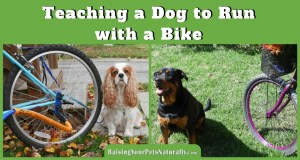 Outdoor Dog Activities: How to Introduce Your Dog to Biking