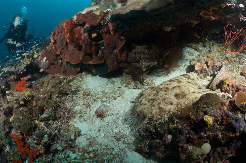 Mioskun Unterwasserwelt - einzigartige Tauchplätze Raja Ampat